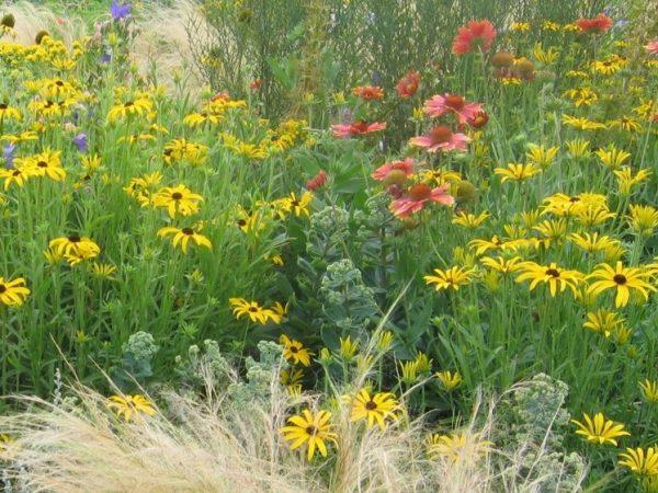 Blütenmeer der bienenfreundlichen Stauden in unserem Garten