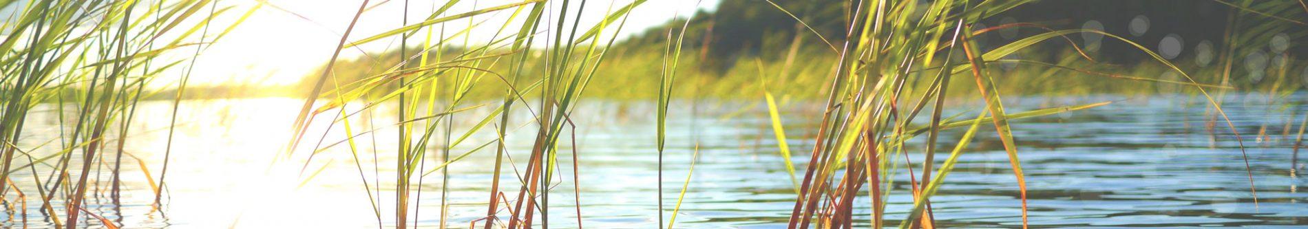 Lichtblicke am Seeufer. Durch das Seegras schimmert das vom See reflektierte Sonnenlicht. Damit wird zu Kontakt und Anfahrt die wunderschöne Umgebung illustriert.